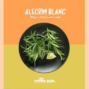 Fragrancias para Marketing Olfativo Cheiro Bom alecrim blanc