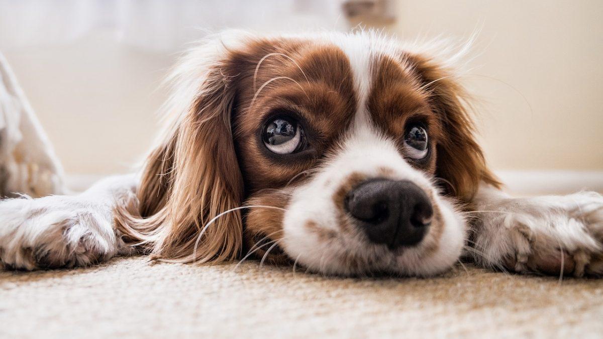 Como se livrar do cheiro do cão?