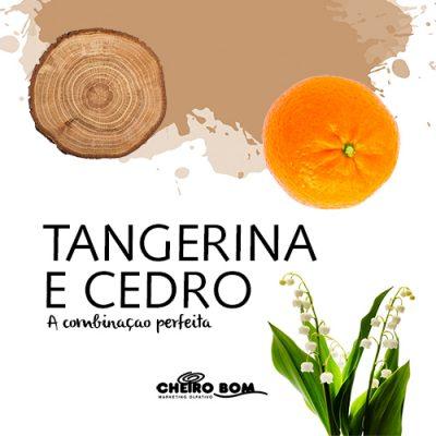 cedro e tangerina-4